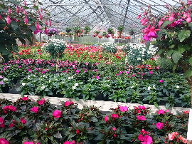 Balkonpflanzenzeit