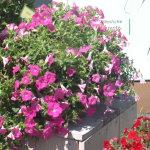 Blumenschale