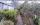 Enzianbäume