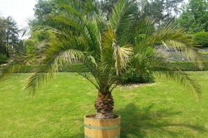 Urlaubspflege für Pflanzen